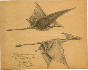 Pterosaurs sketched by eyewitness Eskin Kuhn